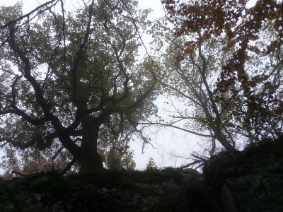 gardiens de la grotte aux oeufs sainte baume