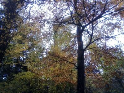 sainte baume forêt 4