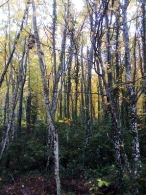 sainte baume forêt